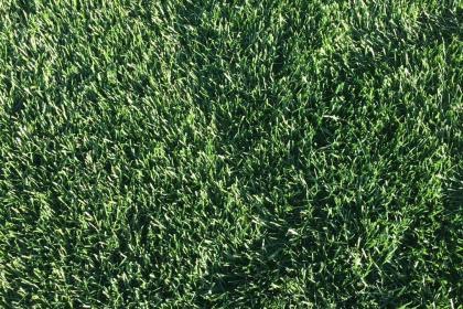 丹东草坪种植基地,育万亩苗木,建秀美江山