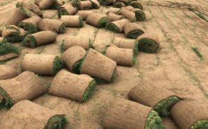 营口草坪苗木种植基地,育万亩苗木,建秀美江山