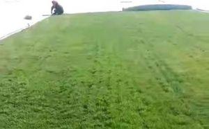 辽阳早熟禾草坪供应,科学种植,更易存活