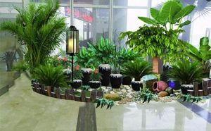 南山室内绿化租摆,品种齐全,养护精心