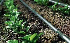 河南郑州农人灌溉供应乔灌木根部灌水器
