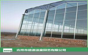 花卉无土栽培玻璃温室大棚-青州德源