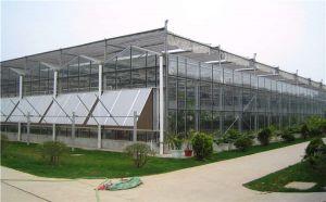智能温室大棚 温室大棚建设 温室大棚报价